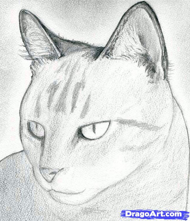 how to draw the realistic head of a cat step by step