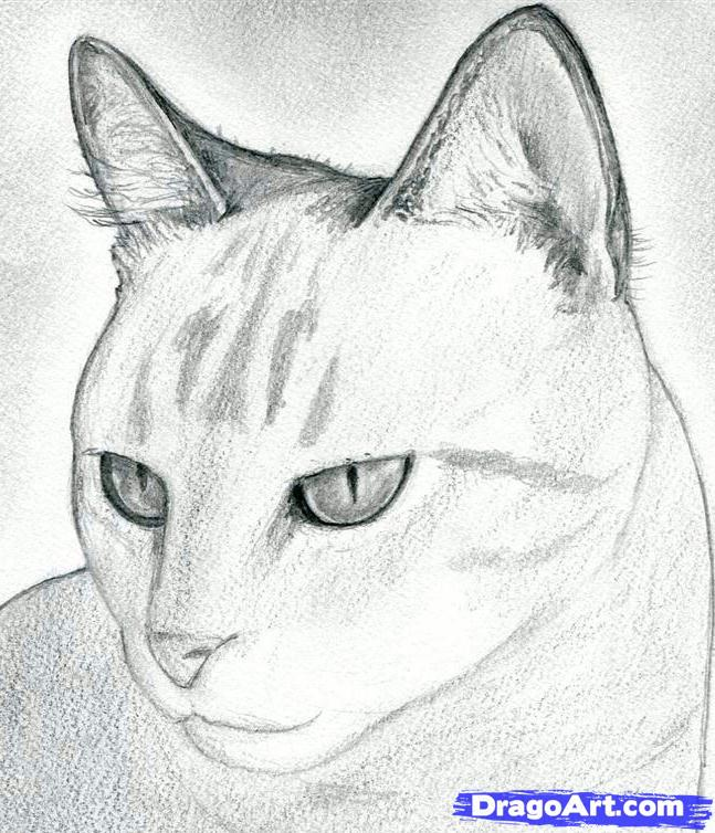 How to Draw the Cat with the Pencil step by step 9