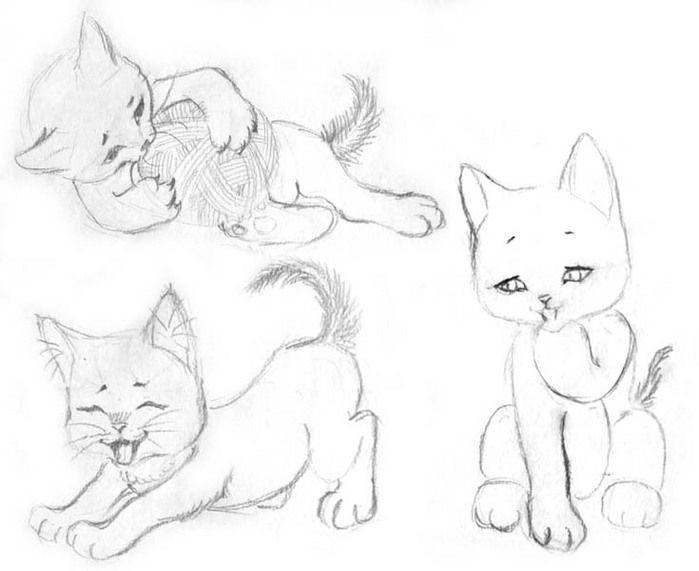 We draw kittens step by step