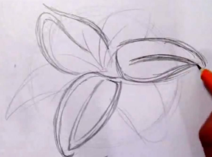 How to draw a butterfly in style of a tattoo with a pencil step by step 2