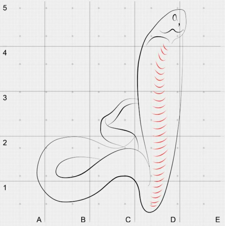 How to draw a red scorpion in 3D step by step 4