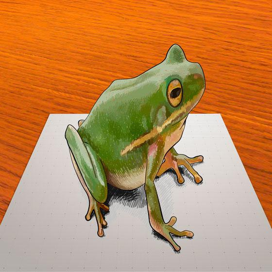 How to draw a frog in 3D on paper step by step