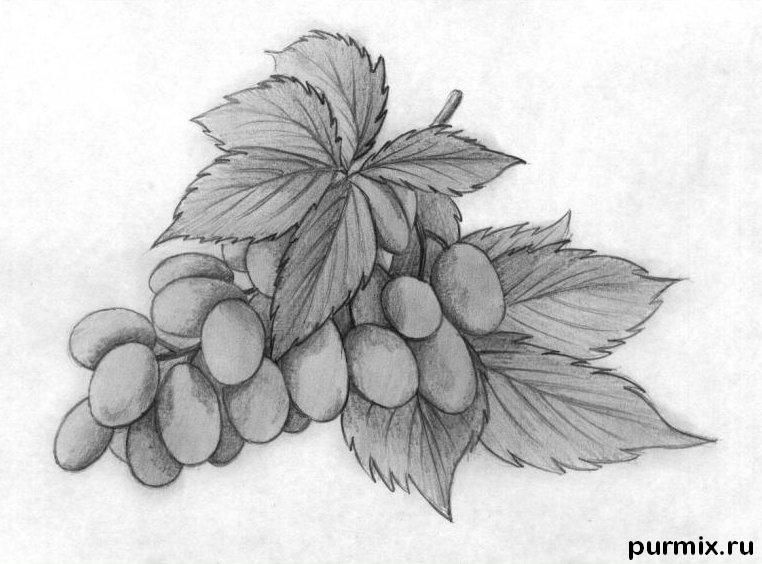 How to draw a grapes brush with a simple pencil