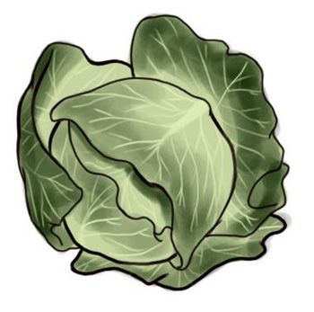 How to draw Cabbage with a pencil step by step