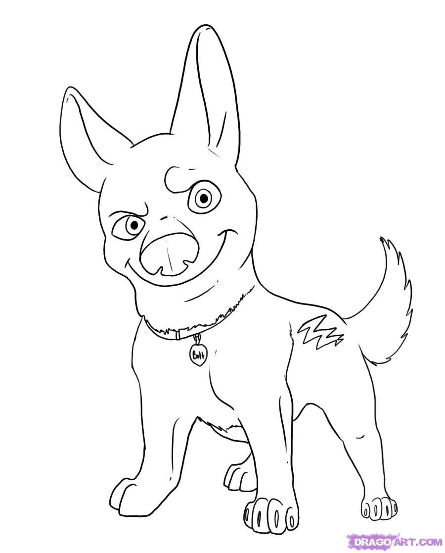 How to draw a dog Volta with a pencil step by step