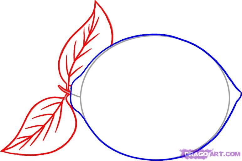 As it is simple to draw cherries with a pencil step by step 4